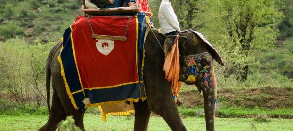 Elephant Camp Dera Amer
