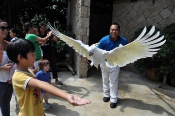 Animal and Bird Encounters