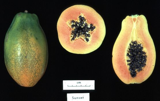 C:\Users\user\Pictures\Malaysia\National Fruit Papaya.jpg