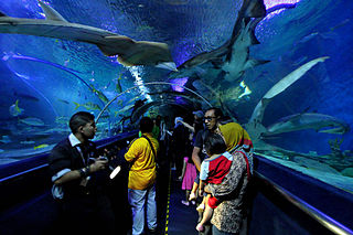 https://upload.wikimedia.org/wikipedia/commons/thumb/8/8c/Underwater_tunnel_in_Aquaria_KLCC.jpg/320px-Underwater_tunnel_in_Aquaria_KLCC.jpg