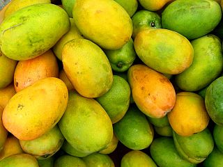 https://upload.wikimedia.org/wikipedia/commons/thumb/9/95/Mangifera_indica_%28Manguier_4%29.jpg/320px-Mangifera_indica_%28Manguier_4%29.jpg