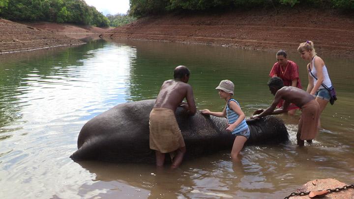 Image result for elephant rehabilitation centre trivandrum