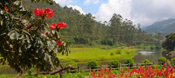 Blossom International Park Munnar