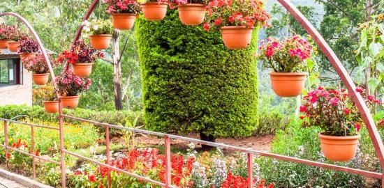 Rose Gardens Munnar