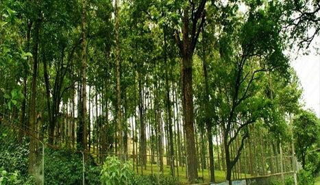 Sandalwood Forests Maryoor